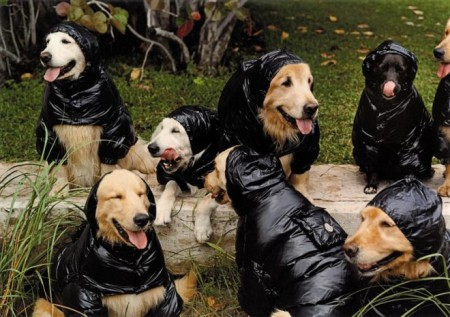hundesuits