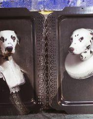 Dalmatinerpaar